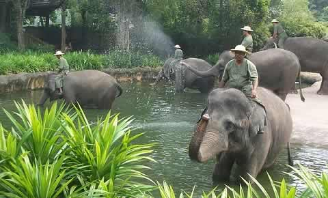 Elephant Show at Singapore Zoo is called Elephants at Work and Play