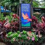 Jurong Bird Park, Singapore – Birds, Shows, Tickets, Bus