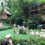 "Bird Show, ""High Flyers Show"", at Jurong Park, Singapore"