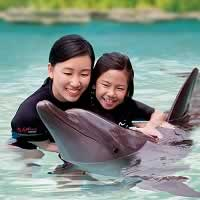 Swim and interact with dolphins at Dolphin Island, Sentosa Island.