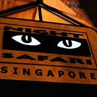 Night Safari is Singapore's best Zoo and Number 1 tourist place