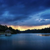 MacRitchie Reservoir Park And Trail In Singapore's Rain Forest